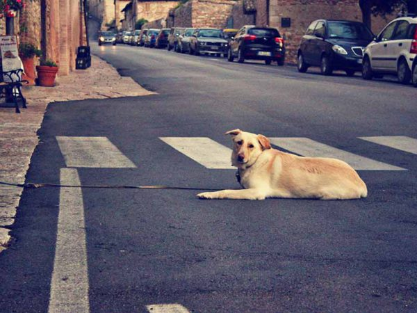 4 de abril, Día Internacional de los Animales Callejeros
