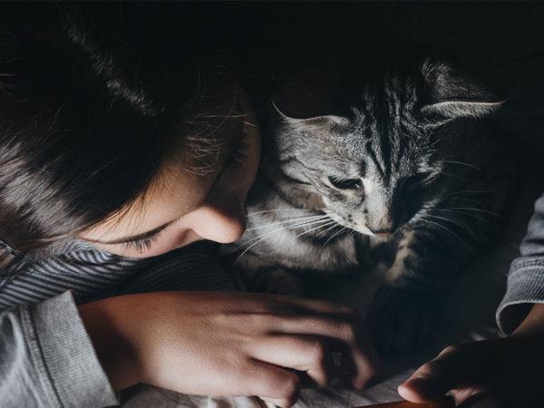 Los gatos sienten el mismo cariño hacia sus cuidadores que los perros