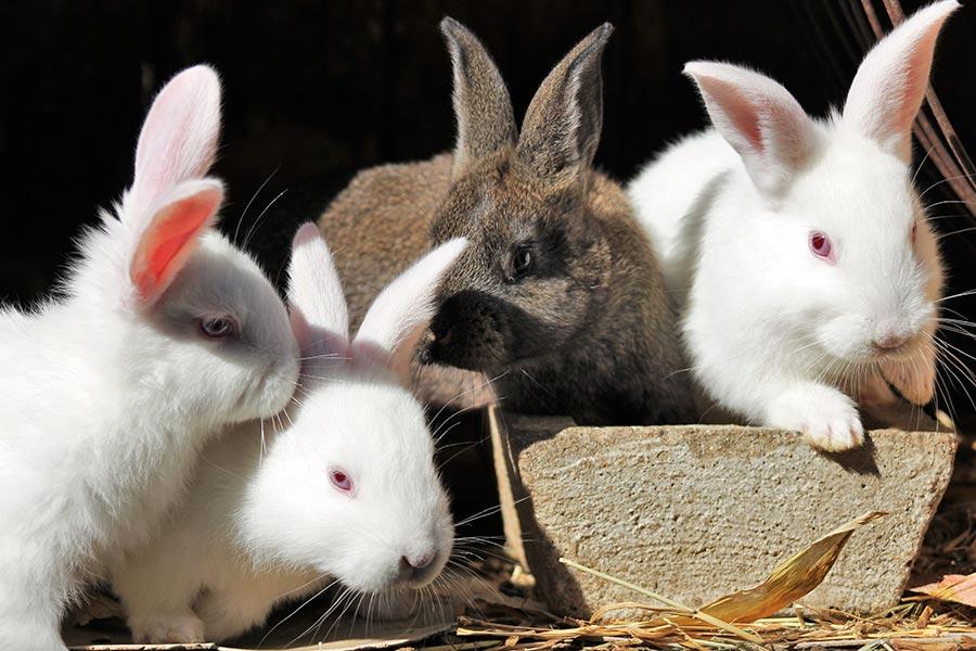 Enfermedades comunes en conejos y cómo evitarlas