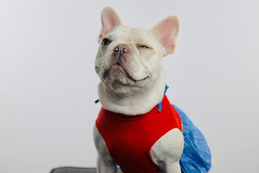 Disfraces para mascotas en Halloween, ¿pesadilla o diversión inofensiva?