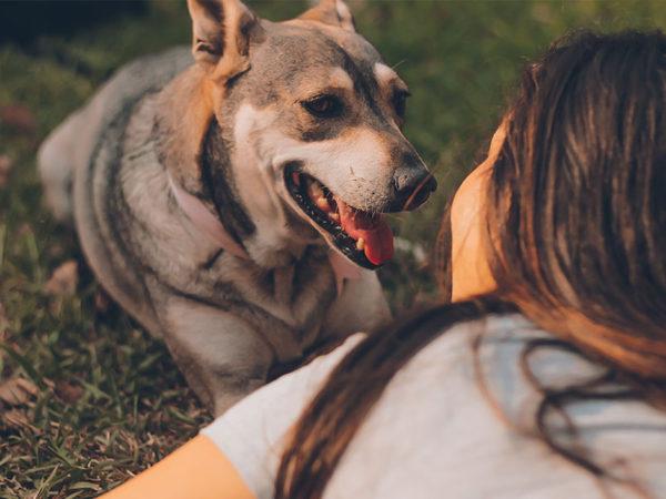 ¿Qué razas de perros se adaptan mejor a mi personalidad?