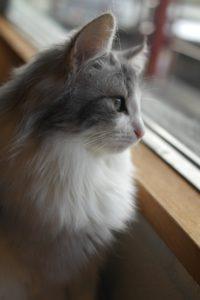 efectos cuarentena en gatos